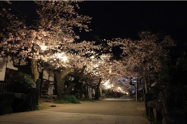夜桜の散策も楽しみたい
