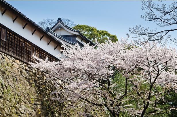 【写真を見る】1000本もの桜と荘厳な城の競演