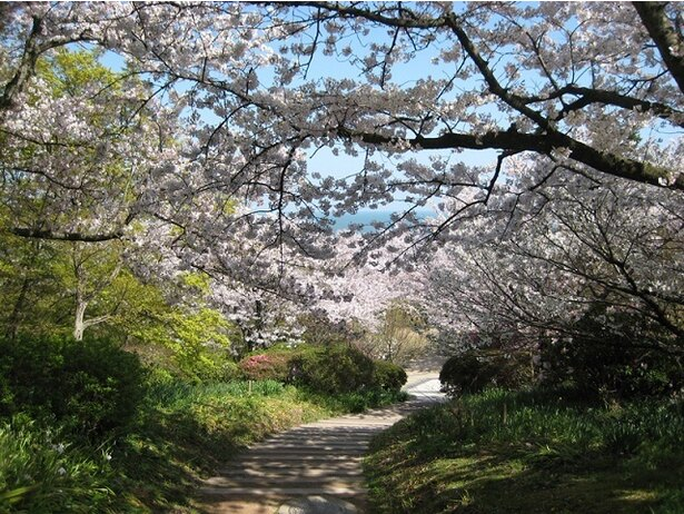 桜のトンネルは写真映えするスポットだ