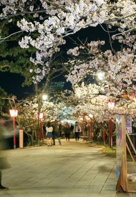【写真を見る】小城公園 / 和傘&ぼんぼりで浮かぶキレイな夜桜も必見!
