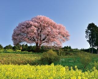 一度は見たい!佐賀&長崎の絶景さくらスポット4選