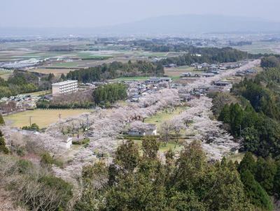 母智丘公園 / 南九州でも屈指の桜名所。芝生広場や遊具広場にも桜が開花する