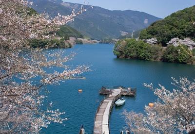 【写真を見る】市房ダム湖 / 圧巻の一万本桜!ダム湖のまわりがピンク色に染まる