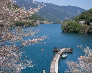 一度は見たい!熊本&鹿児島の絶景さくらスポット4選