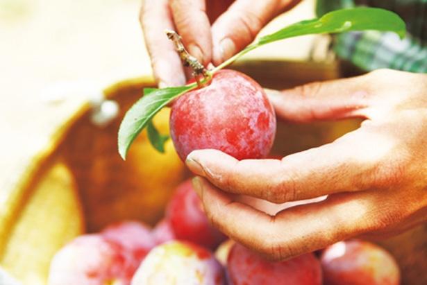 果物農園のフレッシュなスイーツ/堀内果実園