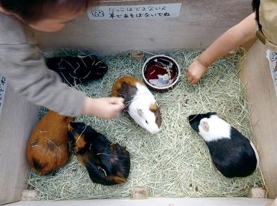 福岡市動物園 / モルモットやウサギと触れ合える「こども動物園」。木曜を除く毎日、9:45~11:45、13:30~16:15と1日2回実施