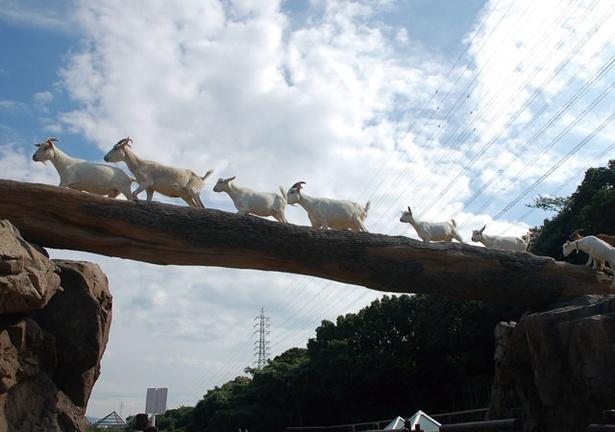 到津の森公園 / 優れたバランス感覚で丸太の橋を渡るヤギたち