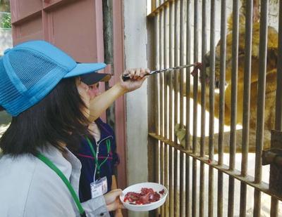 大牟田市動物園 / 毎月開催! 「一日飼育員体験」