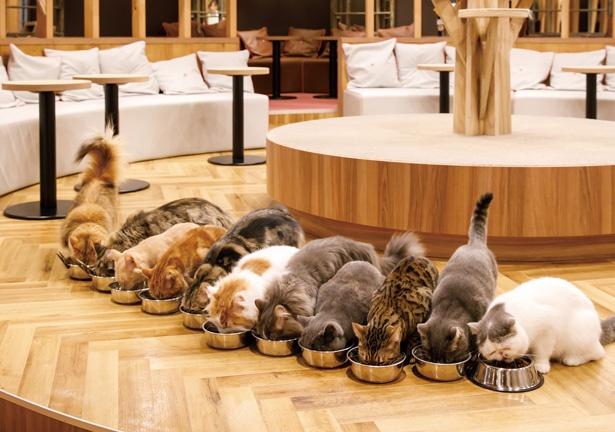 カフェ 名古屋 猫