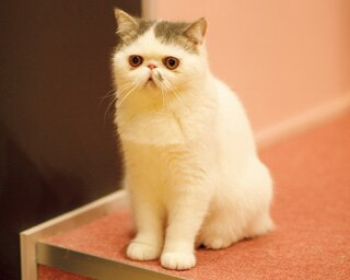 みんなお気に入りの場所でくつろいでいる。気分次第で寄ってきてくれるかも!?/「猫カフェ MOCHA(モカ) 名古屋栄店」(名古屋市中区)