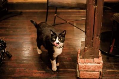 猫店長 小太郎(5歳、オス)。魚が大好きで、グルメな雑種。ダンディな鼻ヒゲがチャームポイントだ /「cafe泉」
