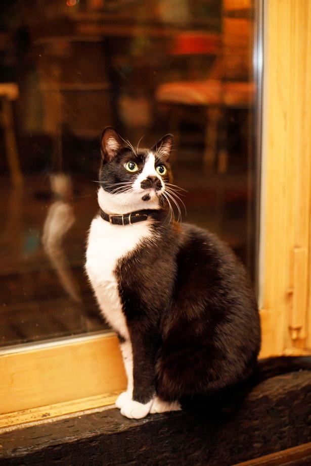 窓際の特等席から店内を見渡すのがお気に入り /「cafe泉」