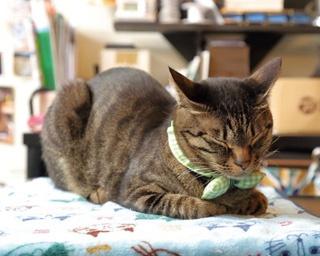 看板メニューの「洋風猫まんま」(中、600円)はトッピング(50円~)も可能 /「Café Chaton Rouge」