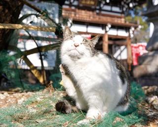 癒されながら、ご利益も!?看板ネコが暮らす名古屋の寺って?