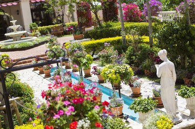 アリビラ パティオフェスティバル / パティオのシンボルとなっている噴水や女神像が色とりどりの花に囲まれる