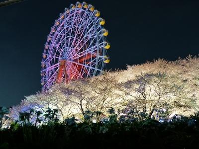ライトアップした観覧車から桜と夜景が望める