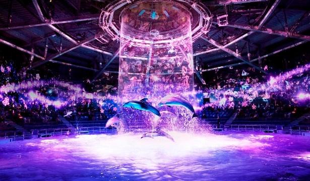 水・音・光・映像などの最先端デジタルアートによって創り出すドルフィンパフォーマンス