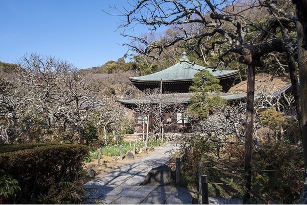 いつ訪れても四季を感じる「瑞泉寺」の境内。4月上旬にはサクラも