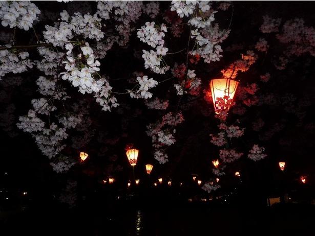【写真を見る】夜の鶴舞公園。ライトアップが幻想的