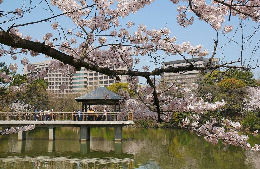 いままさに満開!名古屋のおすすめ花見スポット3選