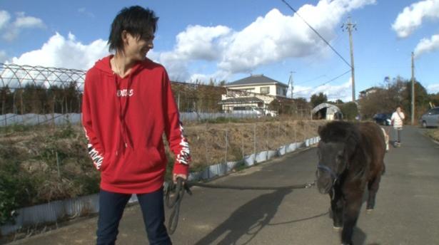 3月16日(土)放送の「天才!志村どうぶつ園」は静岡の白井家に再密着。写真は白井家の次男・迅くんとかわいいポニーのエリー