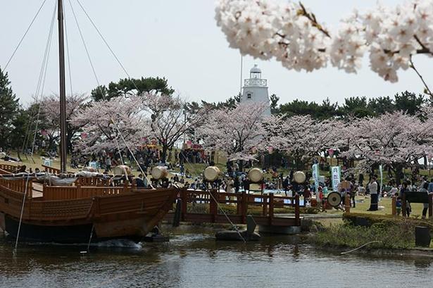 ソメイヨシノなど約400本の桜がずらり