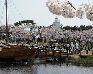 桜の名所でお花見!山形県酒田市で「日和山桜まつり」開催