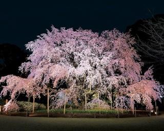 「史上初」の試み続々登場、進化する花見の楽しみ方!プロが教える桜の絶景ベスト7