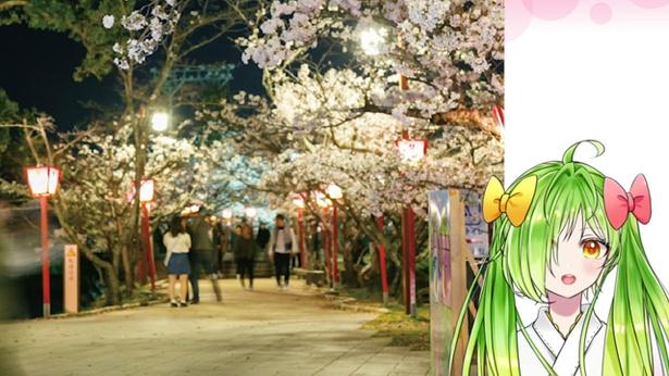 小城公園 / 「さくらの名所100選」に認定されとって 佐賀県随一の花見スポットなんよー!!