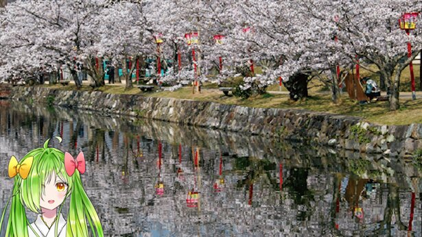 小城公園 / 「逆さ桜」は、ほんとに綺麗かよぉ……。