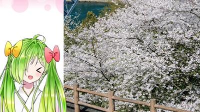 西海橋公園 / 園内にある売店でもよかけど、よかとはやっぱり佐世保バーガーば食べながらお花見やね!!