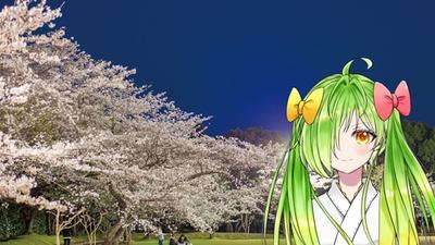 丸岡公園 / 圧巻の霧島連山ば見ながら、目線の高さで桜ば見られるっちゃん!!