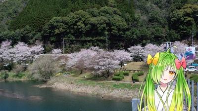 市房ダム湖 / 期間中は「湯山温泉桜まつり」などのイベントも行われとって、ばり賑わうんよおお!!!