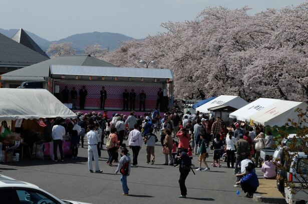 「藤田川ふれあい桜」のお花見(郡山市喜久田町)