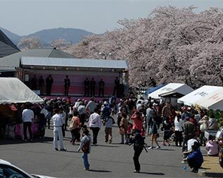 3キロにわたってソメイヨシノが咲く!福島県郡山市・藤田川の桜がまもなく見頃