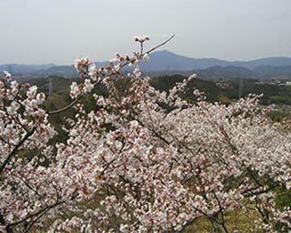 苗木地域を一望する眺めも見事!岐阜県中津川市・苗木さくら公園の桜がまもなく見頃