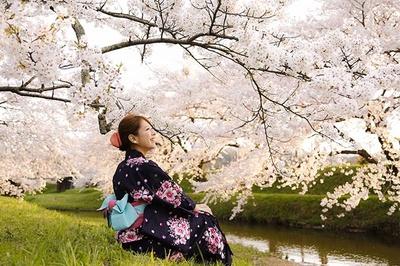 うららかな日差しの中、美しい桜を見に行こう