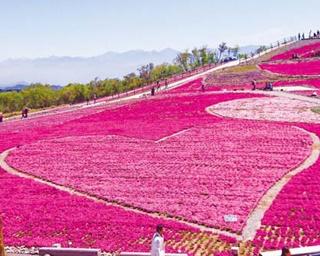 丘一帯がピンクに染まる!愛知の芝桜を見に行く、春のドライブコース