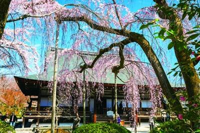 【写真を見る】「多宝殿」には、中央に後醍醐天皇の像、両側に歴代天皇の尊牌が祀られている。入母屋造の屋根とも調和し中世の貴族邸宅を思わせる/天龍寺