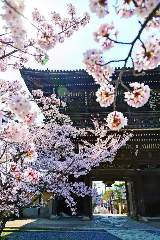 2階2重門の仁王門前に咲く見事なソメイヨシノ。初層には室町時代の仁王像、上層には十六羅漢像を祀る/清凉寺