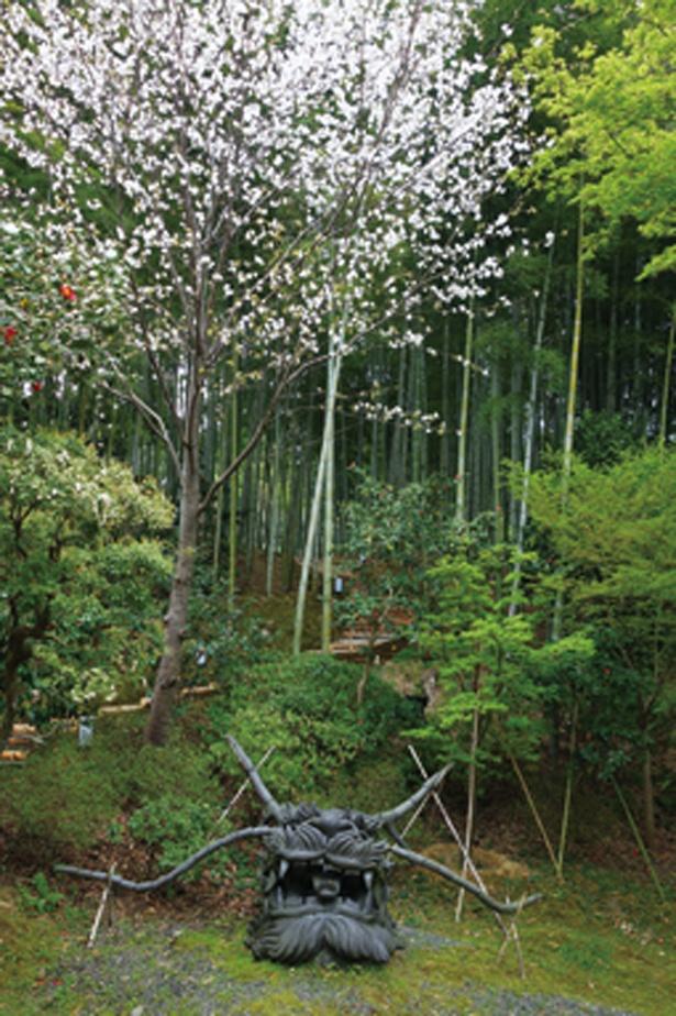 「傘亭・時雨亭周辺」にも見事な桜が自生。傘亭・時雨亭への道中に自生するヤマザクラは境内で最後、4月中旬に開花。素朴なたたずまいに癒されます/高台寺