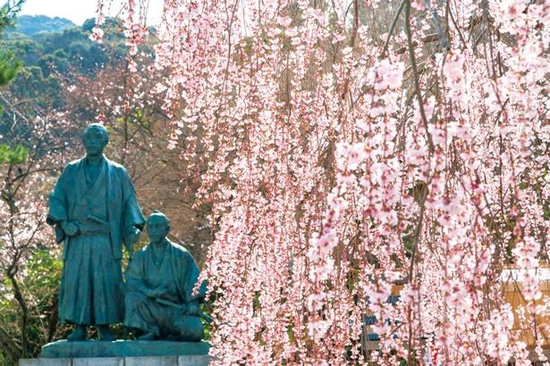 園内には坂本龍馬と中岡慎太郎の像も。春はシダレザクラ越しに見ることができる/円山公園