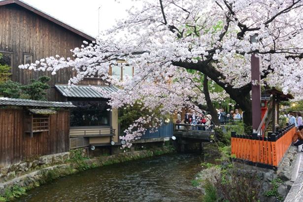 巽橋周辺。現在欄干の付け替え工事中で、3月16日に新しい姿をおひろめする予定/祇園白川