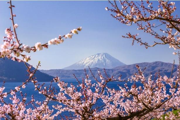 梅が日本にもたらされたのは奈良時代初めの八世紀初頭頃