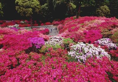 茨城県笠間つつじ公園で「第48回笠間つつじまつり」開催