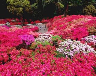 笠間の春を彩る紅!茨城県・笠間つつじ公園で「第48回笠間つつじまつり」開催