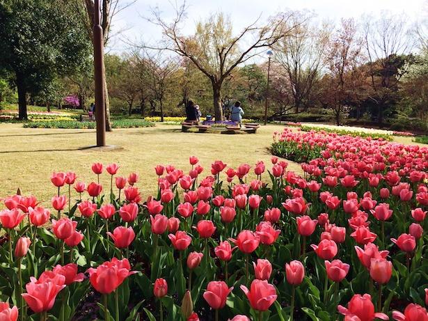 【写真を見る】早咲きから遅咲きまで約70種20万球のチューリップが楽しめる