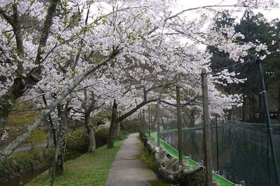 【写真を見る】桜をはじめ四季折々の美しさに魅せられる