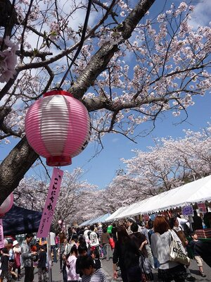 【写真を見る】桜まつり当日はたくさんの出店が立ち並ぶ