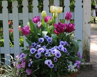 今年は20周年!宮崎県宮崎市で恒例「英国式庭園・春のフラワーガーデンショー」